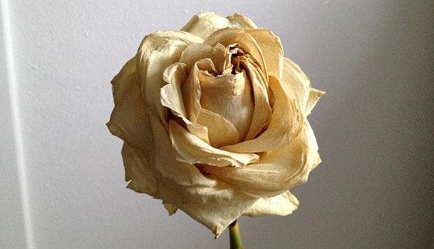 tørret-rose_Mad-og-Have